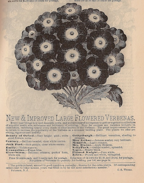 Listing of new verbenas from F R Pierson's 1887 catalog